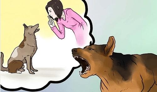 huấn luyện chó sủa người lạ