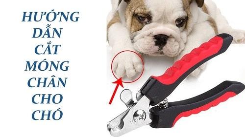 kềm cắt móng chó