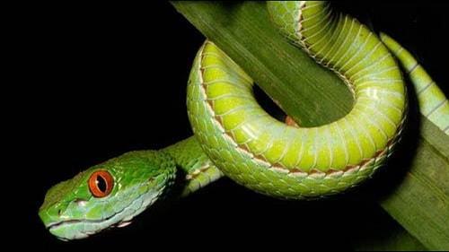 mơ thấy rắn lục là điểm gì