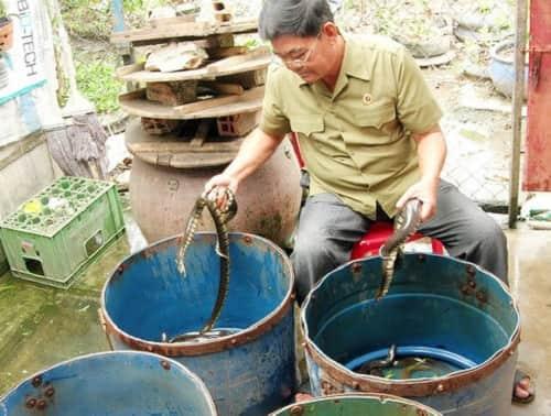 nuôi rắn ri voi trong thùng nhựa