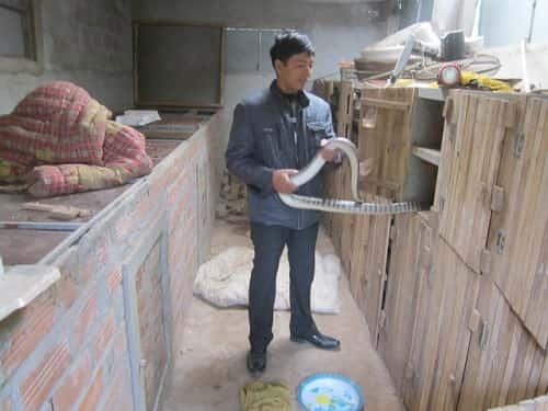 rắn ráo bao nhiêu 1kg