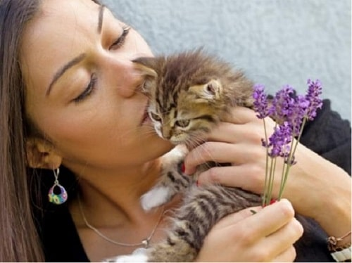 thuốc tẩy giun sán cho mèo
