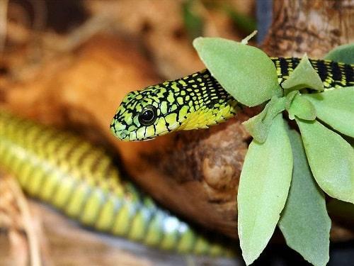 các loại rắn độc