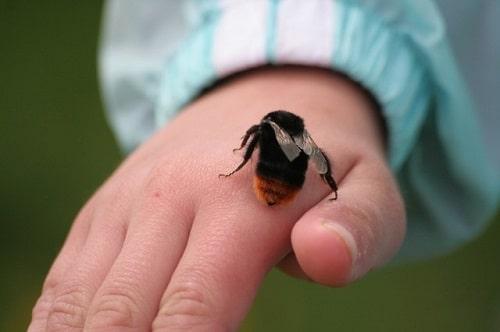 cách chữa ong bầu đốt
