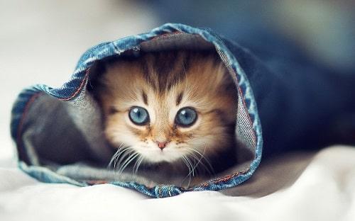 tẩy giun cho mèo