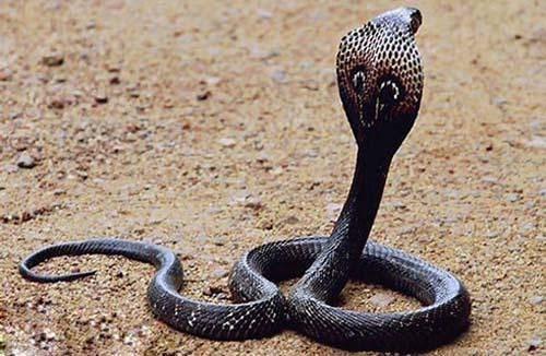thế giới loài rắn