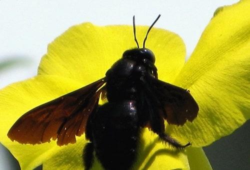 ong bầu ăn gì