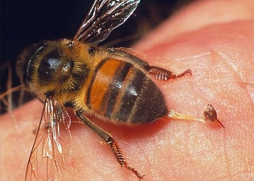ong bầu đốt