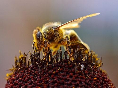 ong đất ăn gì