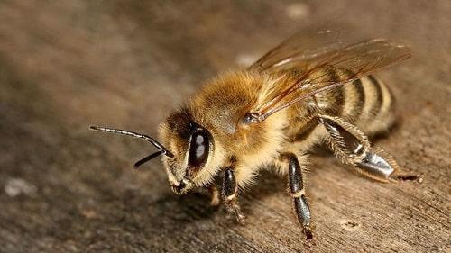 ong đất giá bao nhiêu