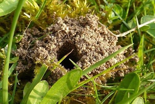 tổ ong đất