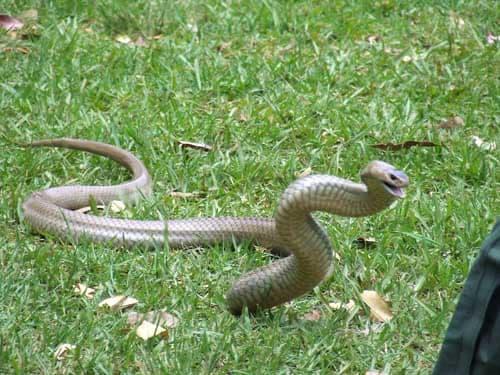 loài rắn dài nhất thế giới