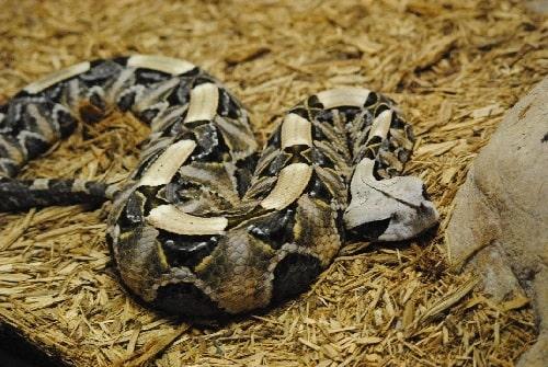 loài rắn độc nhất hành tinh