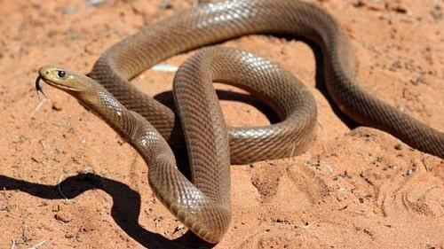 các loài rắn trên thế giới