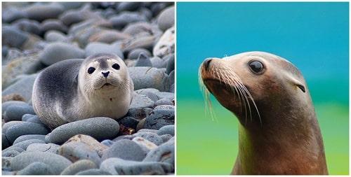 sư tử biển sống ở đâu