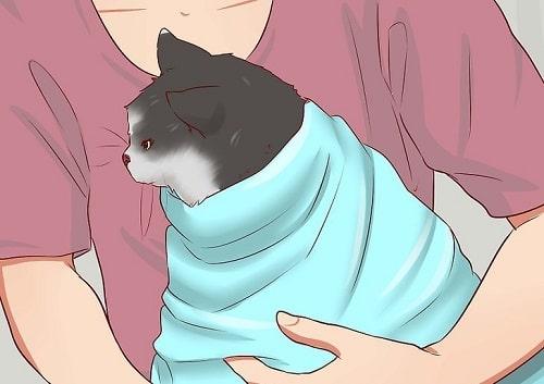 cho mèo uống thuốc tẩy giun