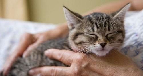 tẩy giun cho mèo bao nhiêu tiền