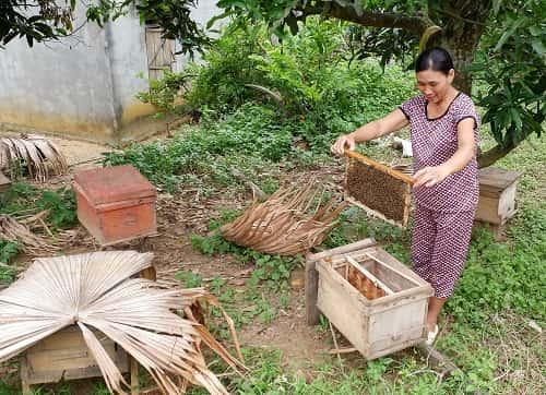 cách nuôi ong khoái