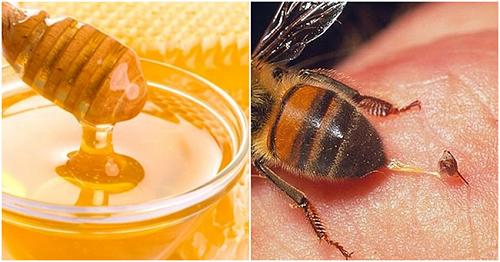 cách trị ong ruồi đốt