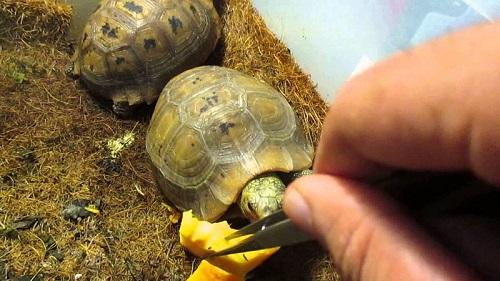 chuồng nuôi rùa núi vàng