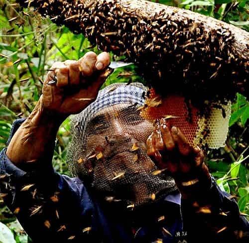ký thuật lấy mật ong khoái