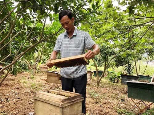 kỹ thuật nuôi ong khoái