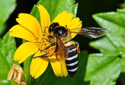ong khoái ăn gì