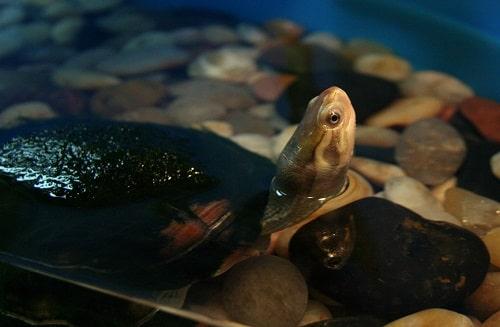 phòng bệnh cho rùa câm