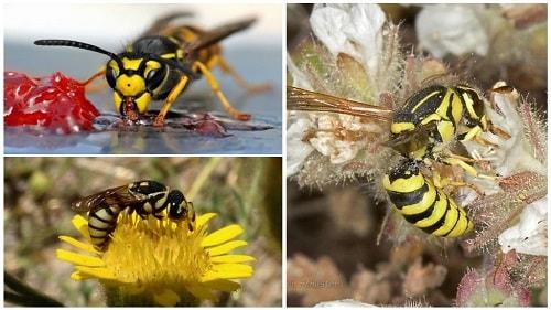 thức ăn của ong