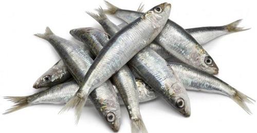 cá sardine