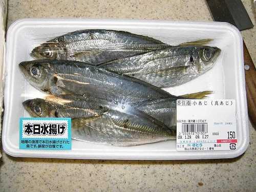 Cá sòng giá bao nhiêu tiền