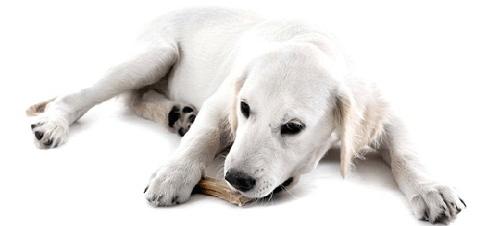cún bị hóc xương chữ T