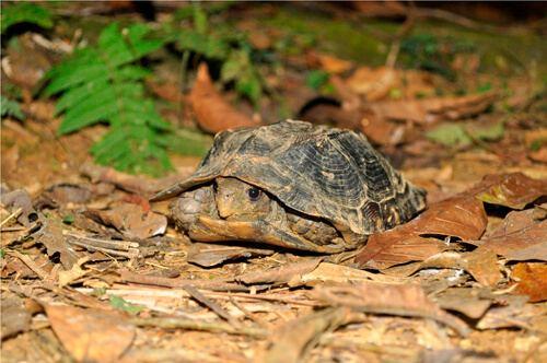 nuôi rùa sa nhân