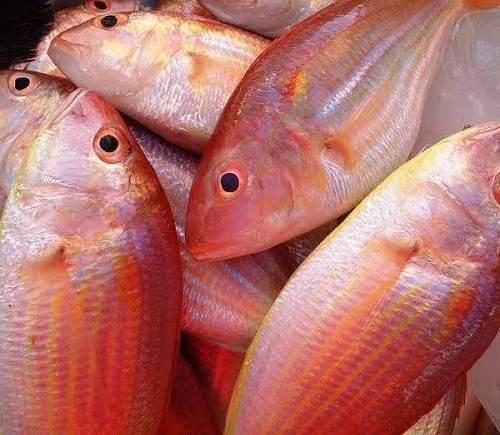cá Đổng Cờ