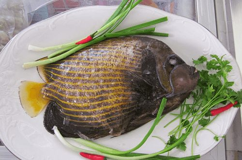 Cá nanh heo làm món gì ngon