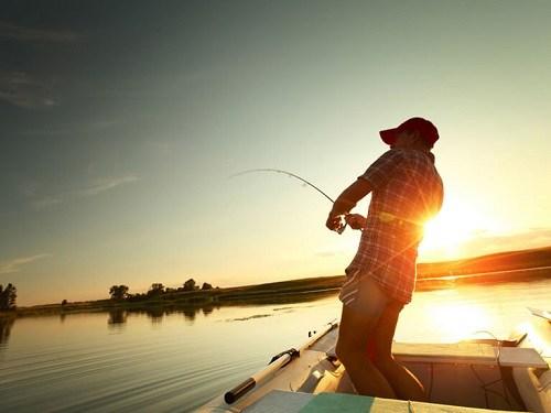 Hướng dẫn cách câu cá Ong