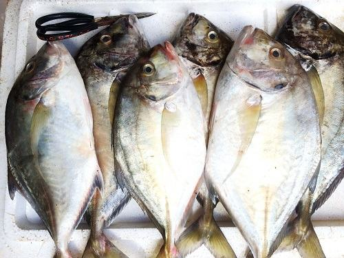 Đặc điểm của cá khế