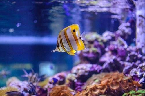 môi trường sống không ổn định của cá