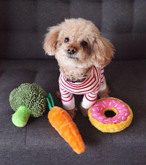 Đồ chơi bánh Donut cho thú cưng