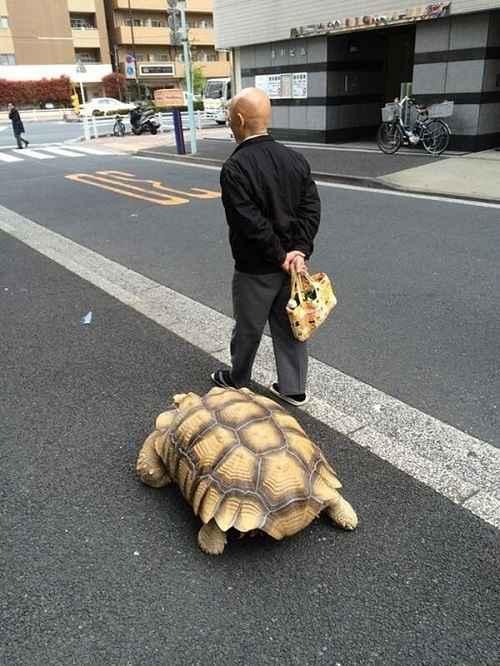Đặc tính của rùa Sulcata
