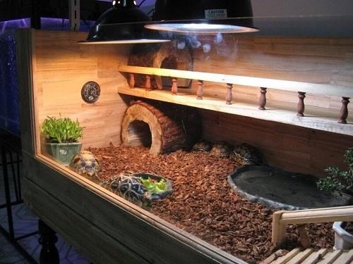 Bể nuôi rùa Châu Phi