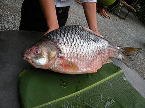 Cá duồng giá bao nhiêu tiền 1kg
