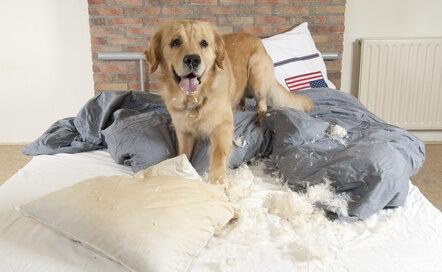 giảm thiểu nguy cơ chó phá đồ đạc