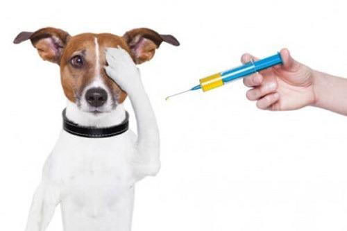 Tiêm phòng vacxin đầy đủ