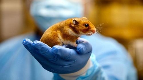đeo găng tay cao su khi cầm chuột