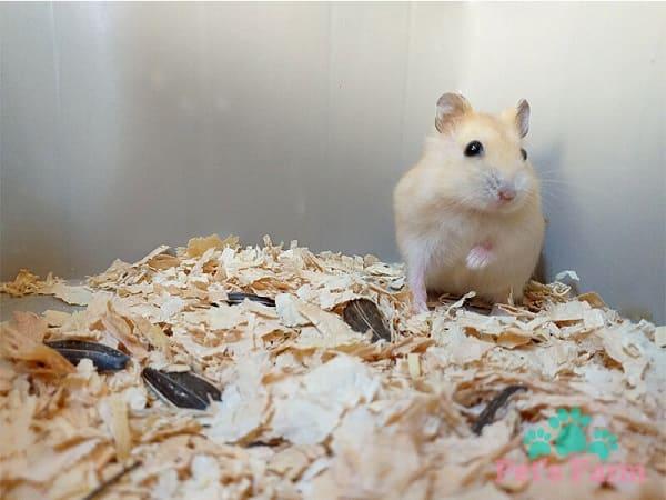 đặc điểm ngoại hình chuột
