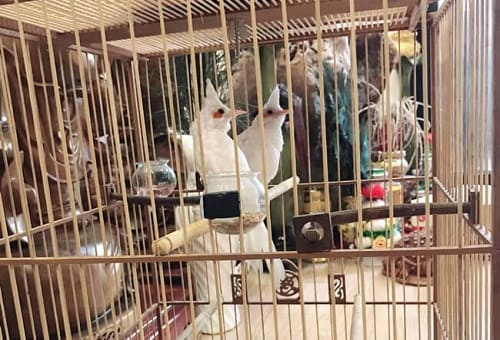 chim bị bệnh