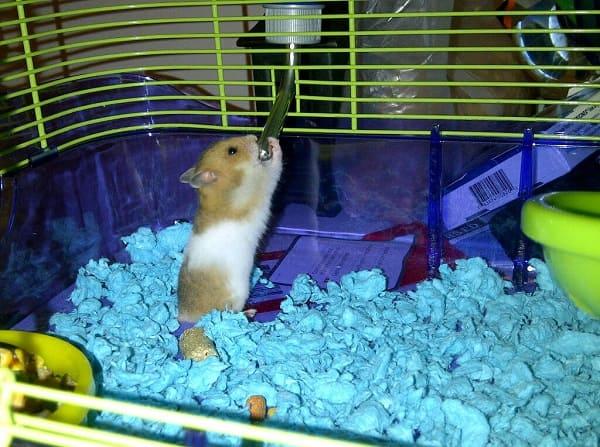 chuồng hamster