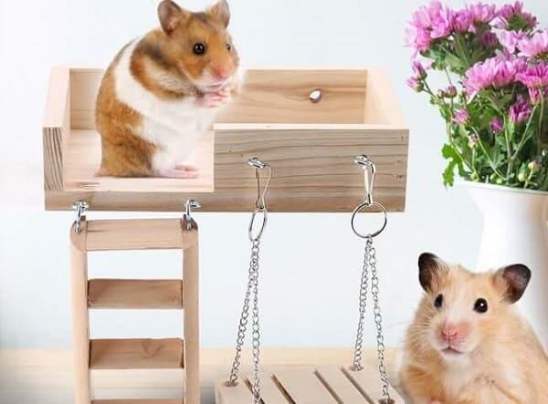 đồ chơi của chuột hamster