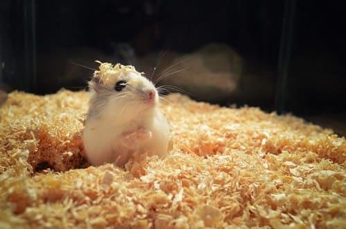 giữ trạng thái bình tĩnh cho chuột